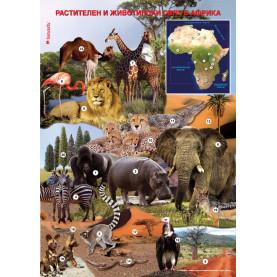 """Учебно табло """"Растителен и животински свят в Африка"""""""