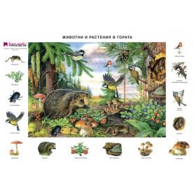 Животните и растенията в гората, учебно табло
